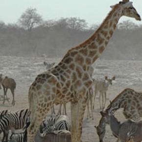 Your First Safari