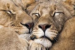 6 Indispensable Tips for your Kenya Safari