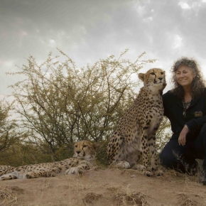 Saving Wild Cheetahs with Laurie Marker [Interview]