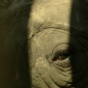 What Dereck Joubert Wants You to Know About Rhinos
