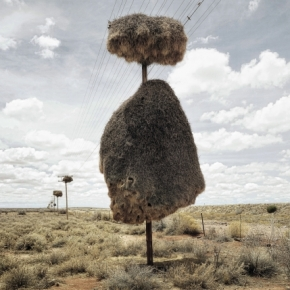 Weaverbirds Nests are Like Huts