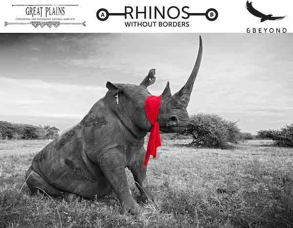 Saving Rhino SavingWild.com