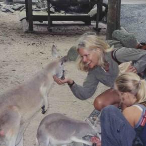 A Kangaroo Nightmare