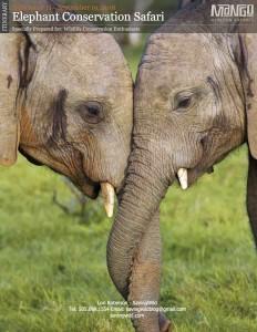 Elephant Focused Safari with Lori Robinson