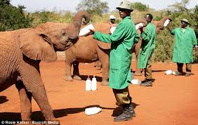 feeding time at Sheldrick center