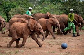 elephants playing ball