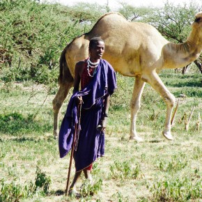 Can Camels Save Africa's Animals?