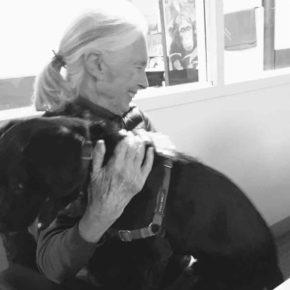 Jane Goodall: An Insiders View