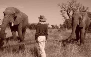 Lori Robinson Up close with Elephants