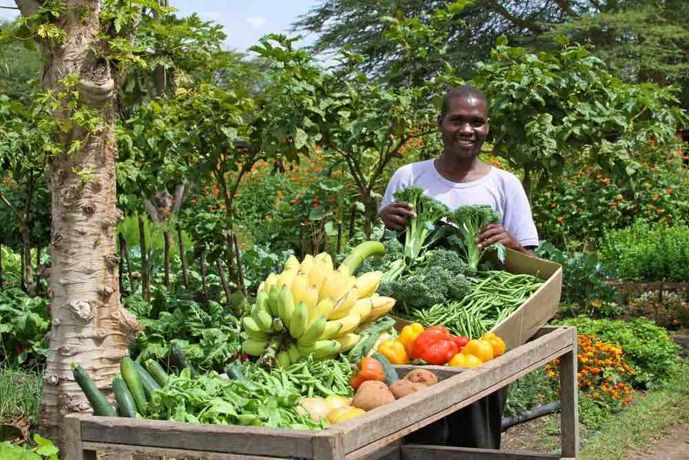 Permaculture helps save wild life in Kenya